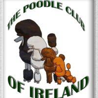 poodle club of Ireland
